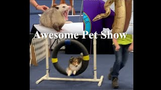 Awesome Pet Show, Fredericksburg, Virginia (with comments from the remarkable organizations)