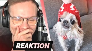 TRY NOT TO LAUGH 37.0 😂😨 | Reaktion