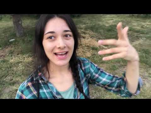 Vlog #263 - Ständig Inlandsflüge im Umweltministerium...// Zeitung fordert: Haustiere abschaffen! ????