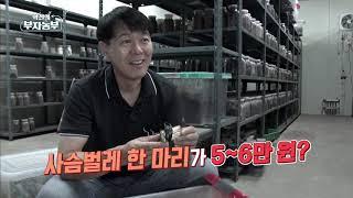 [역전의 부자농부 하이라이트] 국내 사슴벌레 인기 5종