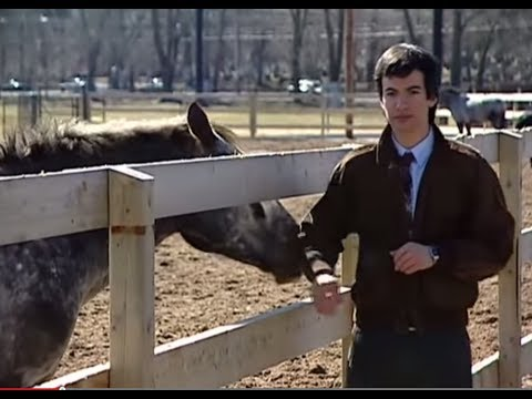 Nathan Fielder On Your Side - What Animals Are Saying