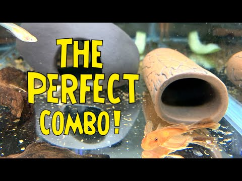 fish-breeding-supplies-from-pleco-ceramics-and-aquarium-coop