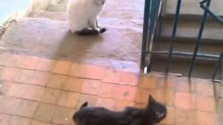 Кошки тоже занимаются с сексом