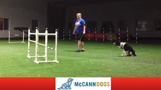 Dog Agility Training: Grand Slam 15 Months