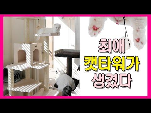 최애 캣타워가 생겼다! 고양이 반응은?