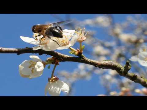 Картинки Весна, обои весна на рабочий стол