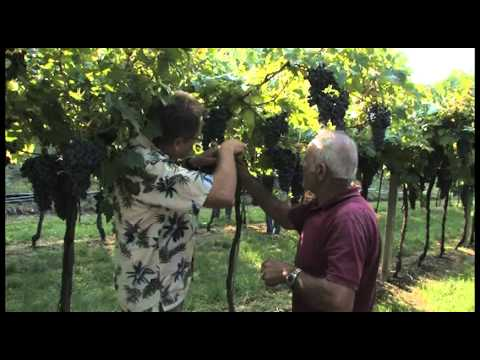 Adventures in Wine Country Season 2 - Bolla Wine