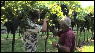 Adventures in Wine Country Season 2 - Bolla Wine