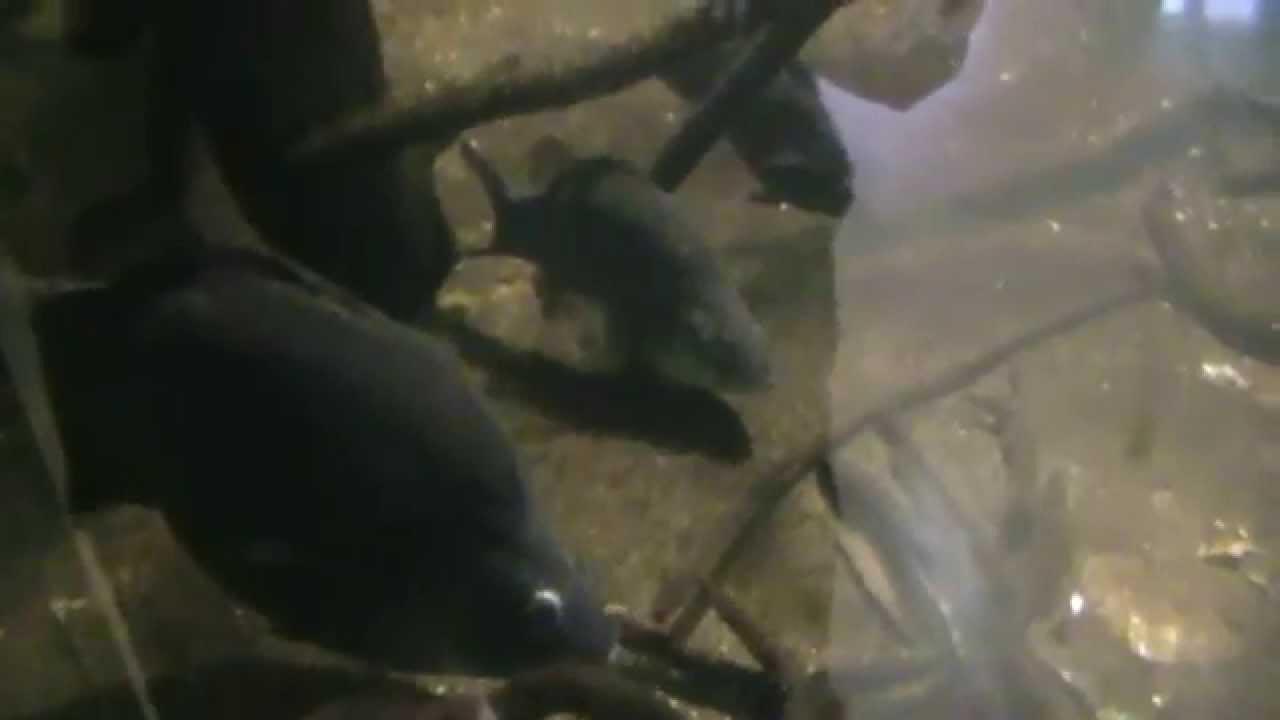 Fish tank queensland - Fish Tank Queensland