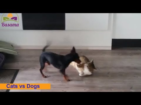 Cats and Dogs Fight  🐱🐶  Cats and Dogs Fighting | Basama TV