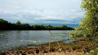 ЖИРНЫЕ КАРАСИ клюют БЕЗ ОСТАНОВКИ! Рыбалка,ловля карася на закидушки и донки, рыбалка на карася