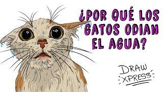 ¿POR QUÉ LOS GATOS ODIAN EL AGUA? | Draw My Life