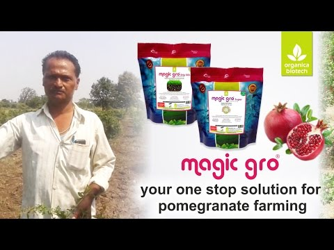 Your one stop solution for pomegranate farming