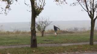 Коммунальщики убирают со двора труп собаки
