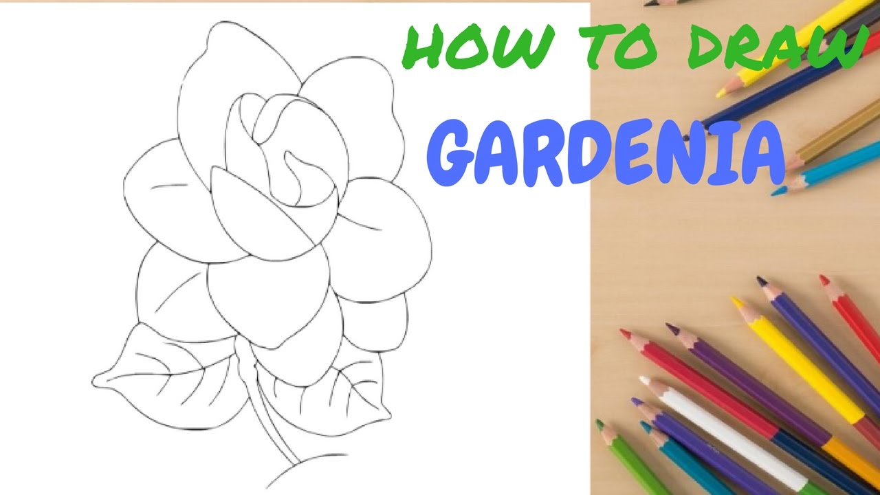 Surprise Kids Hub How To Drawing Gardenia Easy Step By Lessons For