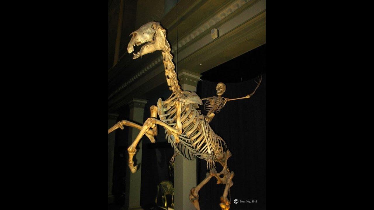 Home Depot Skeleton Horse