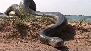 इतिहास के खोजे गए आज तक के 5 सबसे बड़े सांप | 5 Biggest Snakes Ever Discovered In The History