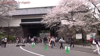 日本武道館 田安門 さくら Japan Tokyo budokan Tayasu-mon sakura 309