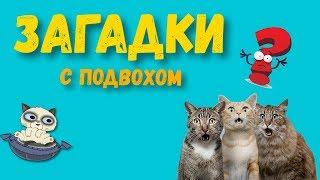 ВИДЕО ДЛЯ ДЕТЕЙ 😺💤💤 Загадки с подвохом – Тест на логику с прикольным котом Тимкой