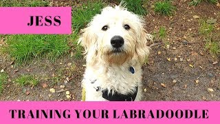 Jess - Training a 6 Month Old Labradoodle Puppy - 2 Week Puppy Boot Camp