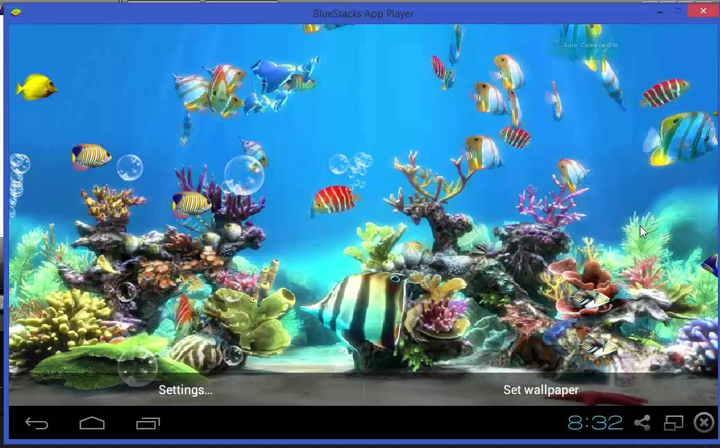 Koi Fish Live Wallpaper Free - YouTube