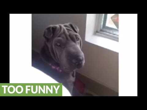 Dog owner gets pup's attention with one specific word