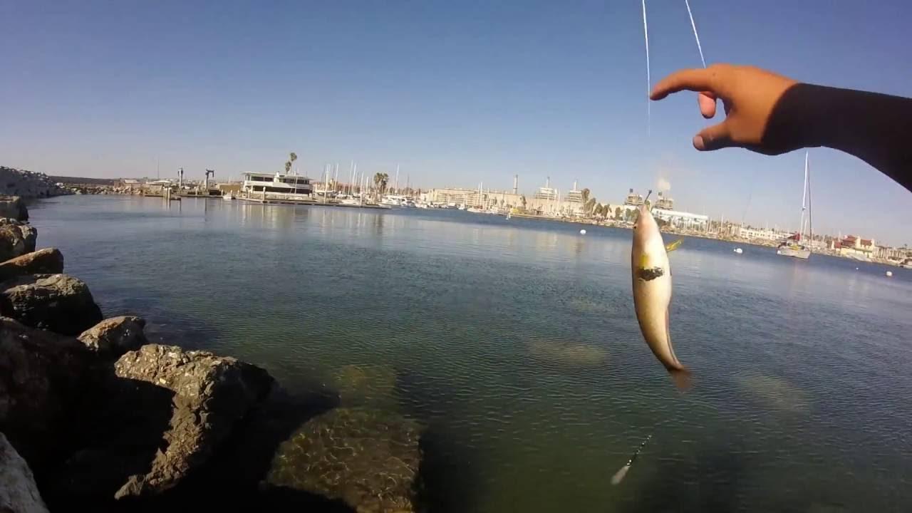 Redondo beach fishing youtube for Redondo sport fishing