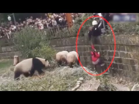 Viral video: Girl falls into giant panda enclosure. Here's what happens next