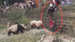 Security guard rescues girl from panda exhibit in SW China zoo