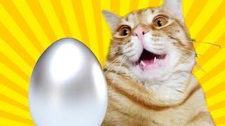 Досліди: ЯК разом з котиком зробити срібне яйце?