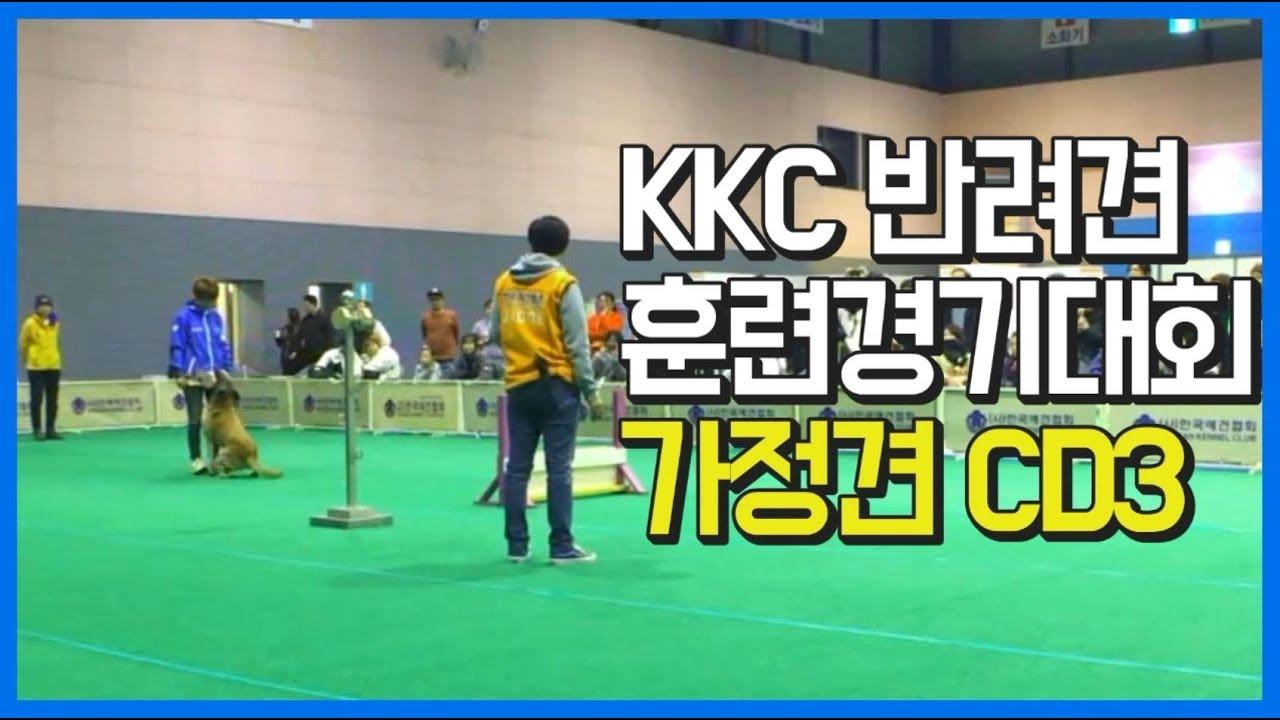 KKC 반려견 훈련경기대회 가정견 CD3 - 김수연 훈련사