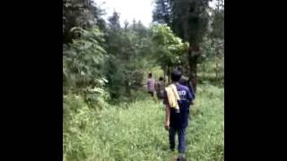 Download Video GREBEG PASANGAN ML DI HUTAN MP3 3GP MP4