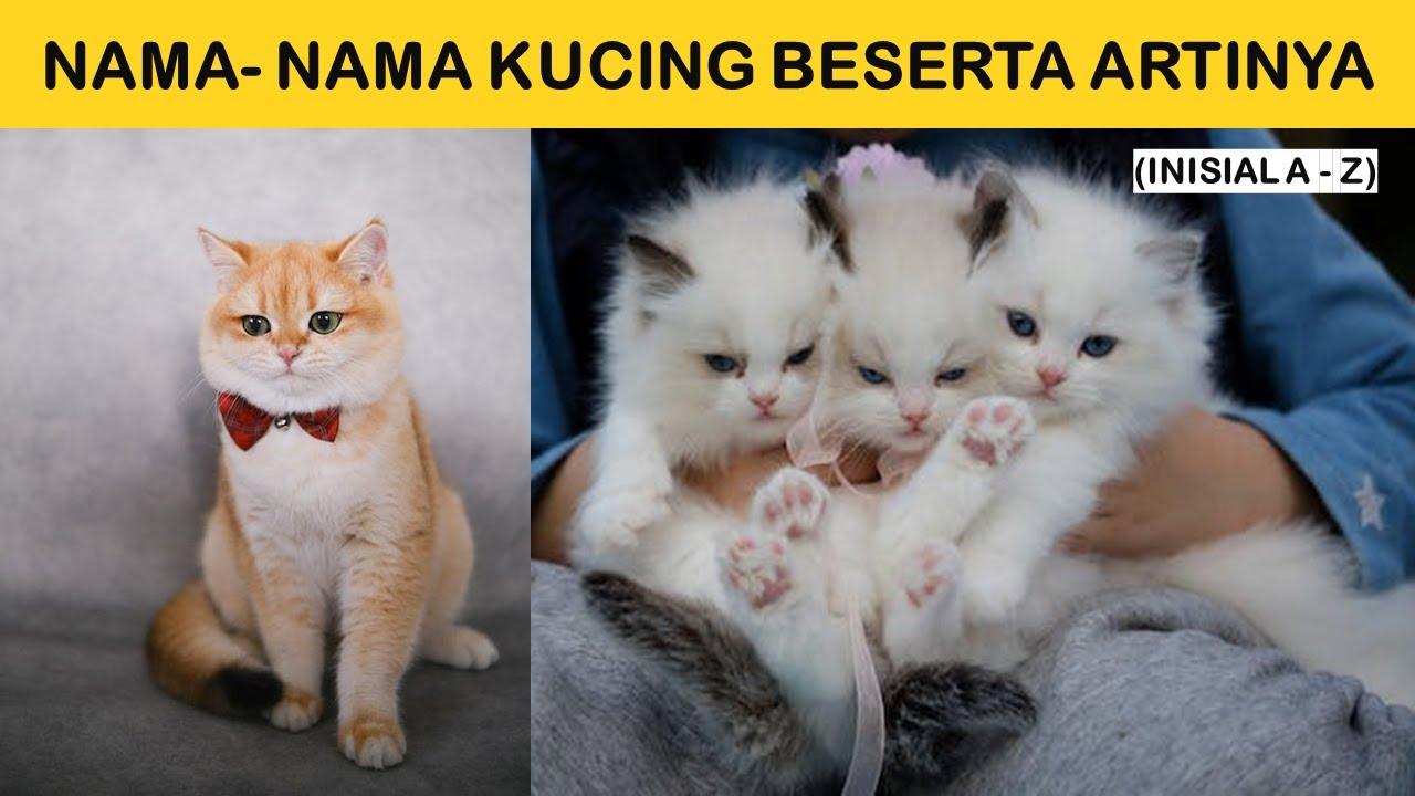 Rekomendasi Nama Kucing Beserta Artinya Inisial A Z Youtube