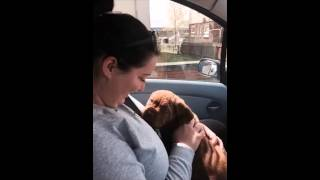 Dogue de Bordeaux 1 day to 1 year