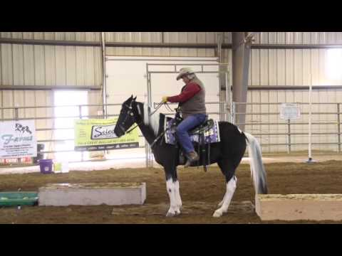 Larry - 2014 Indoor Trail Obstacle Course - SSHBEA Sport Horse Championship