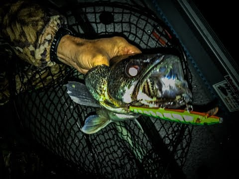 How To Troll For Walleye On Chautauqua Lake
