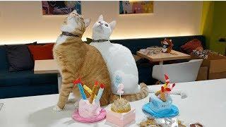 사무실 고양이 2살 생일파티에 생일케이크는 누가 먹었을 까요?