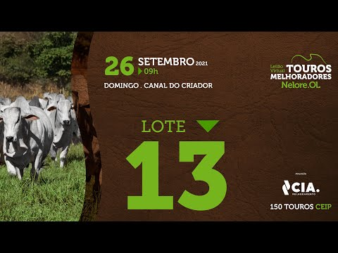LOTE 13 - LEILÃO VIRTUAL DE TOUROS 2021 NELORE OL - CEIP