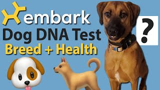 🐶Embark Dog DNA Breed & Health Test! 🐕 Rescue dog results & review!