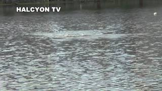 夏の浜名湖はTOPが面白い! 飛豚73プロップを使い、デイゲームでキ...