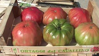 AgriCULTURA VENETA - 06/08/2016 - ORTI CAVALLINO TREPORTI