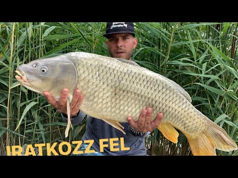 Nagy halak light Feeder-el
