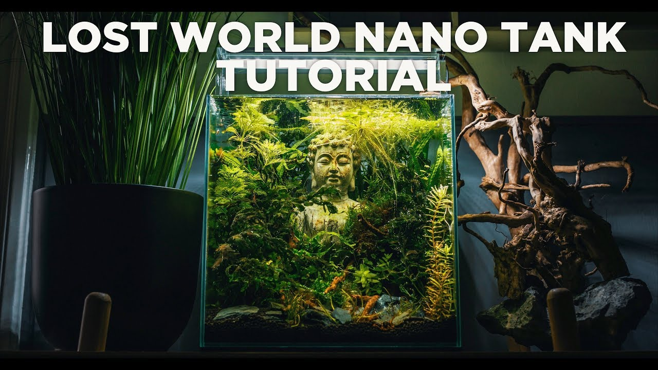 How To Make Your Own Lost World Nano Tank Step By Step Tutorial