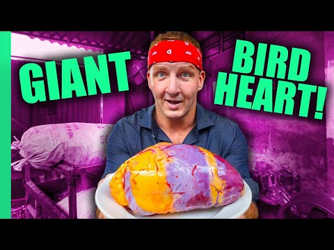 Can You Eat That?? World's STRANGEST Animal Organ Dishes!! | Full Series (Sonny & Calvin)