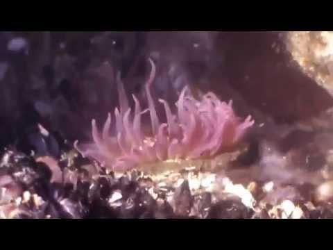 Mar Del Plata Travel Video