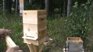 How to inspect a modified Warre hive