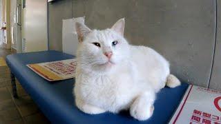 フェリー乗り場待合室で猫に癒やされる