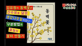김유정의 동백꽃의 실체 생강나무와 산수유의 구분법 및 …