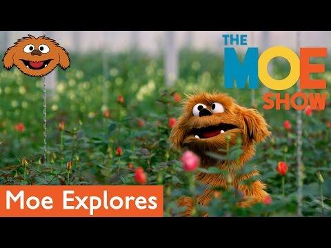 The Moe Show: Moe Explores - Florist