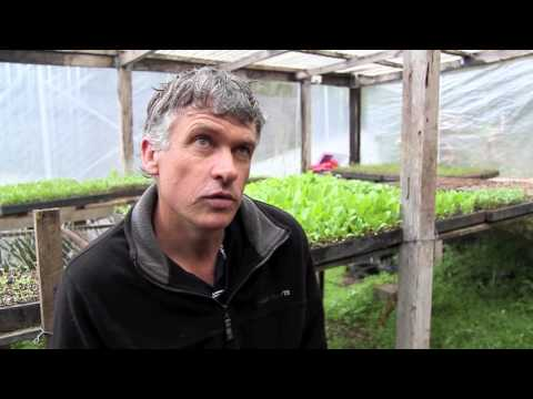Tweed Sustainable Agriculture Strategy farmer case studies - Organics
